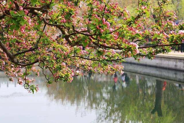 如果北京三环的元大都公园是你家的花园庭院?